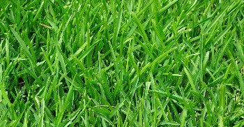 Lawn, Plant and Tree Fertilizing Services